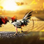 Judi Sabung Ayam dan Tipsnya Di Situs S128